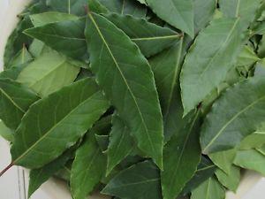 Longtemps utilisé dans la branche de la médecine verte, le laurier fait aujourd'hui son entrée en tant que produit nettoyant